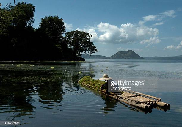 A fisherman gathers sea weed to be used for fertilizer on the shores of the scenic Taal lake where in its center lies peacefully a volcano which also...