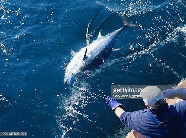 Fisherman hauling in blue fin tuna, rear elevated view