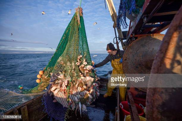 Fisherman hauls in a net full of fish aboard fishing boat 'About Time' while trawling in the English Channel from the Port of Newhaven, East Sussex,...