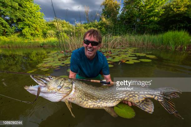 fisherman holding a pike fish - pike fish stock pictures, royalty-free photos & images