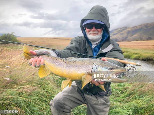 fisherman holding brown trout in patagonia - brown trout stock pictures, royalty-free photos & images