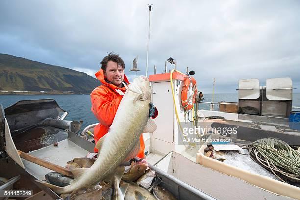 Fisherman holding freshly caught cod on fishing boat