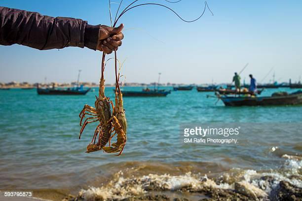 Fisherman Holding Two Dead Lobsters