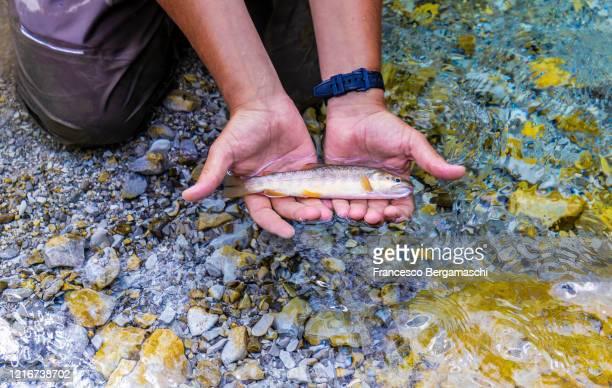 fisherman holds a freshly cought fish in his hands. - italia stockfoto's en -beelden