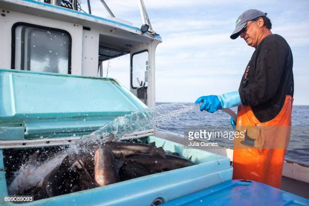 a fisherman hoses off his dogfish catch - dogfish stock pictures, royalty-free photos & images