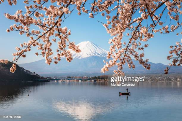 fisherman in boat with cherry blossom, fuji five lakes, japan - mount fuji stock photos and pictures