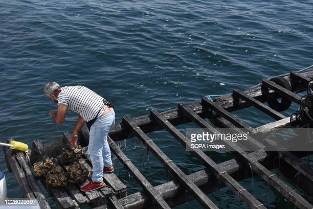 A fisherman in seen on a Batea near O Grove Bateas are wooden platforms in the water for the farming of mussels oysters and scallops O Grove is a...