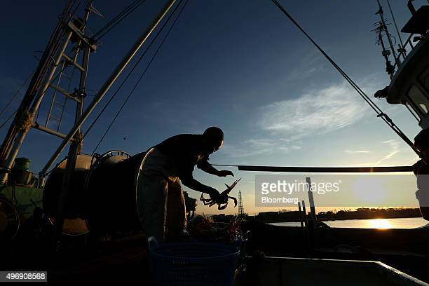 A fisherman is silhouetted as he handles a freshly caught snow crabs on a fishing boat during sunrise at Mikuni Fishing Port in Mikuni Fukui...