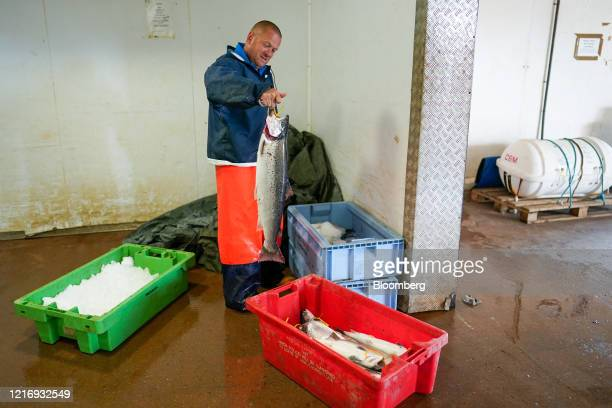 A fisherman loads sea trout into ice boxes in the harbour in Scarborough UK on Tuesday June 2 2020 The threat of a nodeal Brexit is back and with it...