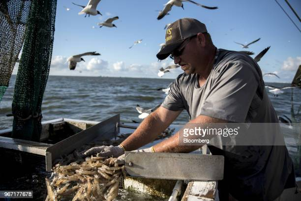 A fisherman loads shrimp into a tank on a boat in Galveston Bay Texas US on Wednesday May 30 2018 China's surging demand for seafood may be about to...