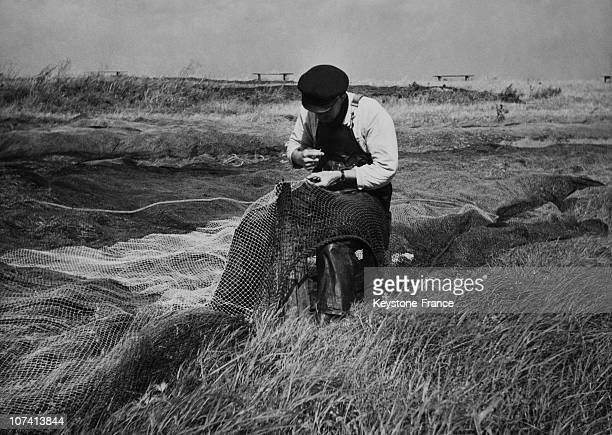 Fisherman Mending Net At Langeland Island In Denmark On August 1951