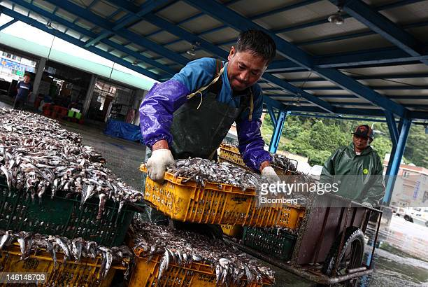 A fisherman moves a crate of anchovies at Mijo port in Namhae South Korea on Friday June 8 2012 The peak season for anchovy fishing in Namhae island...