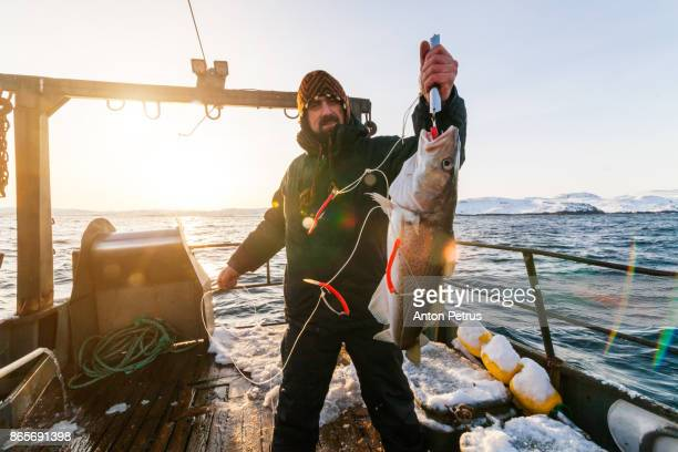 fisherman on boat with cod in the hands at sunset - fishing industry stock pictures, royalty-free photos & images