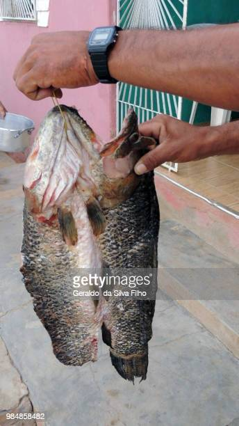 fisherman - filho stockfoto's en -beelden