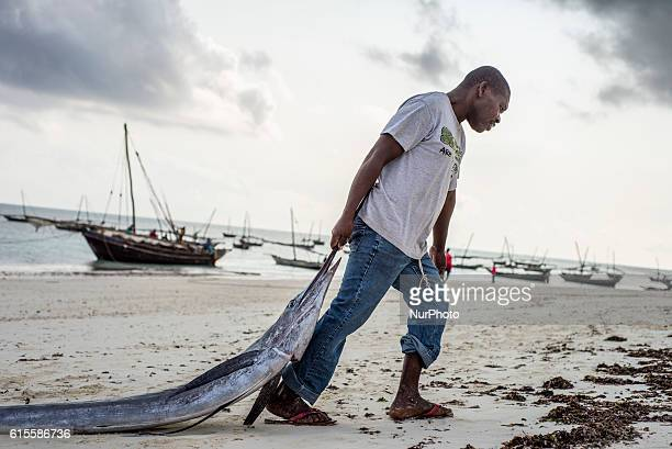 A fisherman pulls his catch marlin fish to the fish market near the ocean in Nungwi village Zanzibar Dealers are ready to bargain for fish during the...