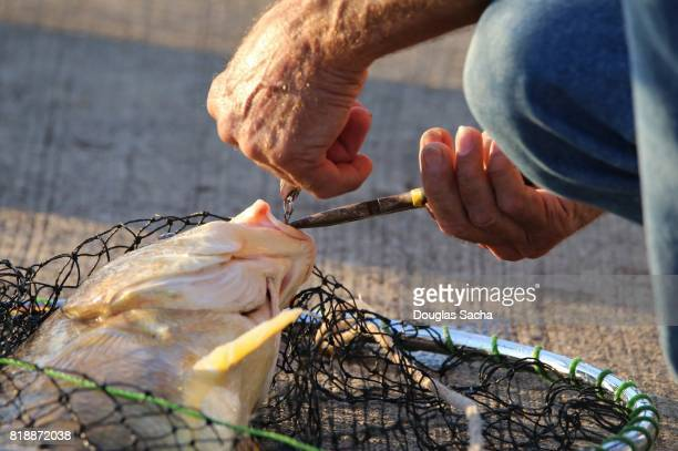 Fisherman retrieves his catch from the fishing net