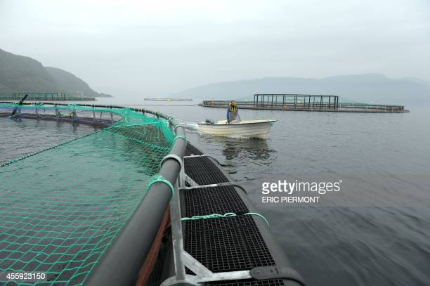A fisherman sails by a submerged cage at a farm of Norwegian world's largest salmon producer Marine Harvest on September 11 2014 in Indre Oppedal 100...