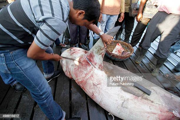 Graphic Content*** BANDA ACEH INDONESIA NOVEMBER 26 Fisherman seen cutting shark fins for sale at the traditional Lampulo fish market on November 26...