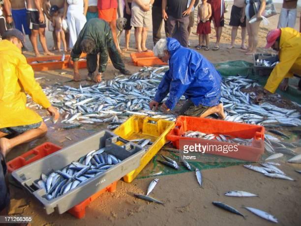 Fisherman sorting fish on beach of Costa da Caparica (Portugal)