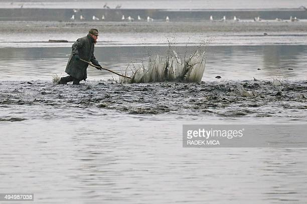 A fisherman strikes a stick into the water in order to catch carps in the Vrkoc pond near Pohorelice southern Moravia Czech Republic on October 30...