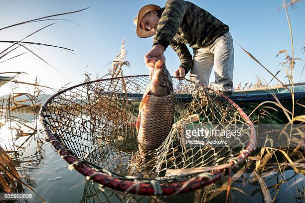 fisherman taking out carp fish - carp stock photos and pictures
