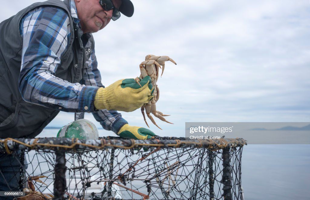 Fisherman throwing a crab back into the water : Stock Photo
