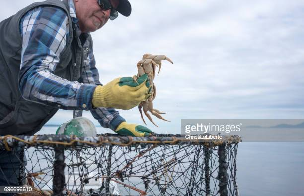 fisherman throwing a crab back into the water - crab stock pictures, royalty-free photos & images