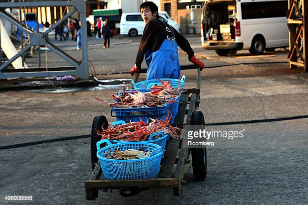 A fisherman transports a cart of freshly caught snow crabs at Mikuni Fishing Port in Mikuni Fukui Prefecture Japan on Friday Nov 6 2015 The ban on...