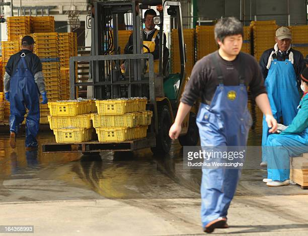 A fisherman transports containers of sand lances on a forklift truck at Mega Fishing Port on March 23 2013 in Himeji Japan Sand lances are a popular...