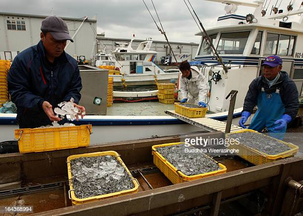 Fisherman unload containers of sand lances from a vessel at Mega Fishing Port on March 23 2013 in Himeji Japan Sand lances are a popular local...
