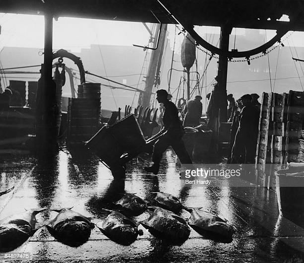 Fisherman unload the catch in Kingston Upon Hull, 1951. Original Publication : Picture Post - 5201 - Fish - pub. 3rd February 1951