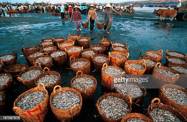 Fisherman Unloading of fishing boats in Vietnam
