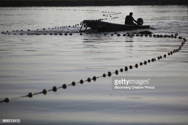 a fisherman uses a motorboat to corral catfish - catfish stock photos and pictures