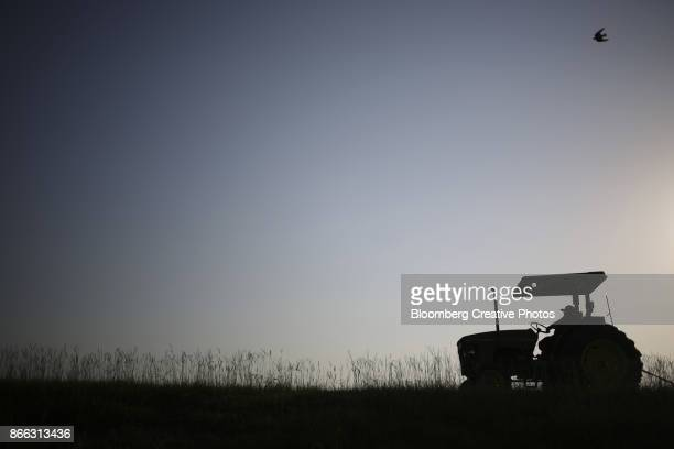 a fisherman uses a tractor to pull a fishing net along the bank of a catfish pond - catfish stock photos and pictures