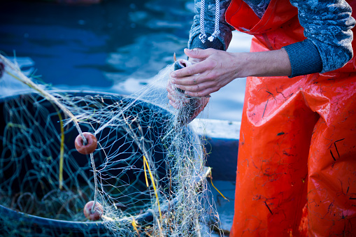 fisherman while cleaning the fishnet from the fish 873140582