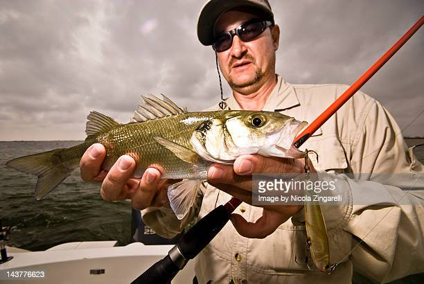 fisherman with sea bass caught with lure - loup blanc photos et images de collection