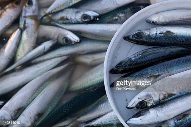 A fishermans catch sits in a bucket on the Galata Bridge on February 20 2012 in Istanbul Turkey Though not the capital Istanbul is the cultural...
