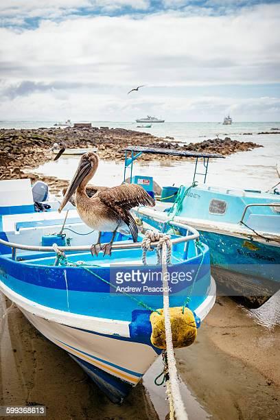 fisherman's dock, puerto ayora, santa cruz island - puerto ayora stock pictures, royalty-free photos & images