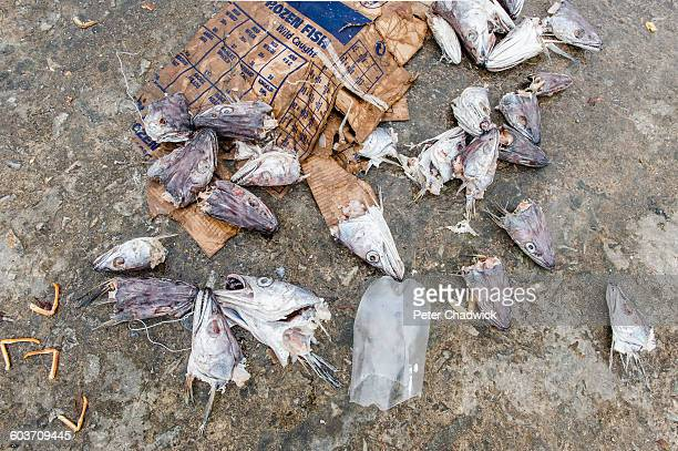 fishermans waste dumped at kleinmond harbour - overberg stock pictures, royalty-free photos & images