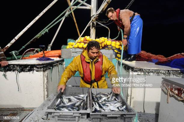 Fishermen aboard the net fishing boat 'Kanedevenn' sort their catch aboard the fishing boat 'Kanedevenn' as they fish sardines on September 24 2013...