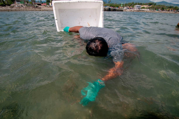 IDN: Coral Transplantation After Being Hit By The Tsunami In Central Sulawesi