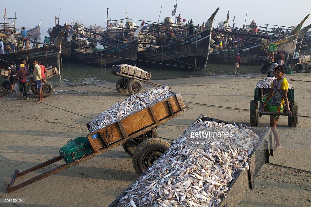 Dried fish village in Coxs Bazar of Bangladesh : News Photo
