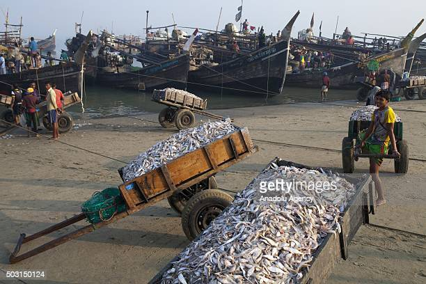 COX'S BAZAR BANGLADESH JANUARY 1 Fishermen are seen before unload their catch of fish from sea Bay of Bengal near fishing village Naziratek in Cox's...