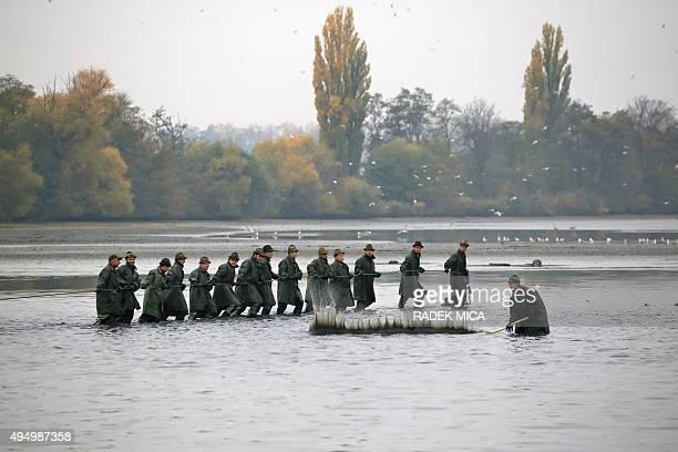Fishermen catch carps in the Vrkoc pond near Pohorelice southern Moravia Czech Republic on October 30 2015 The fish registered as Pohorelice's carp...