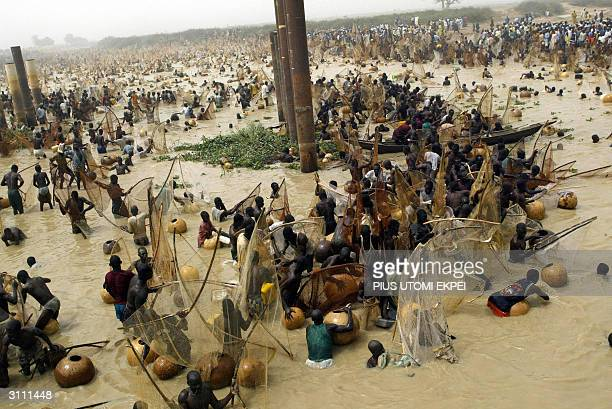 Fishermen catch fishes at the Argungu fishing festival 19 March 2004 in Kebbi State of northern Nigeria Thousands of fishermen participated in the...
