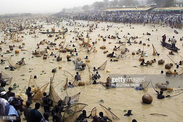 Fishermen catchfishes at the Argungu fishing festival 19 March 2004 in Kebbi State of northern Nigeria Thousands of fishermen took part in the mock...