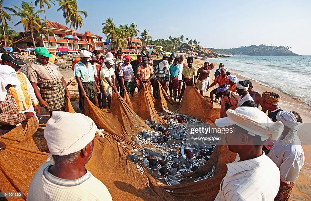 Fishermen collect the fresh fish out of their net at Kovalam Beach. on December 11, 2009 in Trivandrum, Kerala, South India.