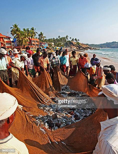 Fishermen collect the fresh fish out of their net at Kovalam Beach on December 11 2009 in Trivandrum Kerala South India