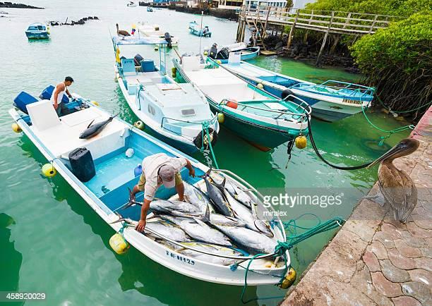 fishermen done unloading tunafish at puerto ayora fish market - yellowfin tuna stock photos and pictures