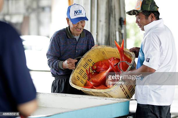 Fishermen empty a basket of freshly caught alfonsino fish onto a work bench for them to be sorted by size at Inatori fishing port in Higashiizu Town...